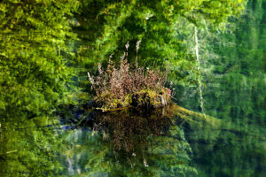 europe/italy/floating rock green tree reflection garden abstract
