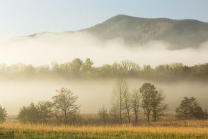 Foggy morning, Cades Cove, Great Smoky Mountains National Park, Tennessee