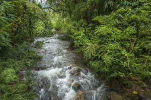Forest interior. Bwindi Impenetrable Forest. Uganda