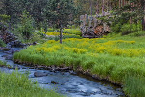 French Creek in the Black Hills of Custer State Park, South Dakota, USA