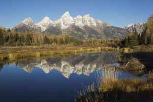 Grand Tetons Reflecting in Beaver Pond