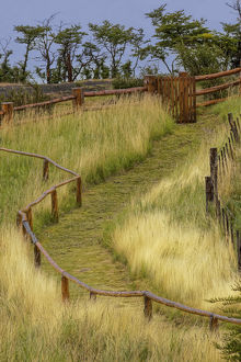 Grass lined pathway, Los Glaciares National Park, Argentina, South America, Patagonia