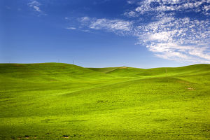 Green Wheat Grass Fields Blue Skies Palouse Washington State Pacific Northwest