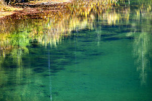 europe/italy/green yellow moss underwater reflection abstract