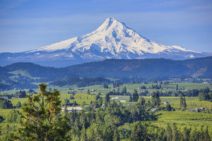 Hood River, Oregon. Snow capped Mount Hood dominates over the green valley, farms