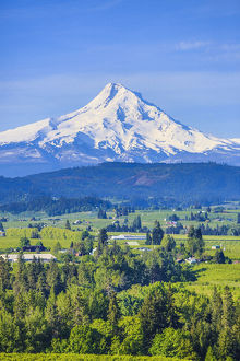 Hood River, Oregon. Snow covered Mount Hood, foothills, valley, farmland with orchards