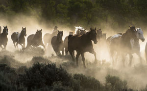 Horses being herded by a wrangler, backlit at sunrise