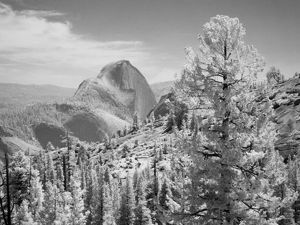 Infrared photo in East side of Yosemite National Park, California