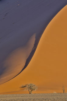 Lone tree and tall sand dune, Sossusvlei Namibia