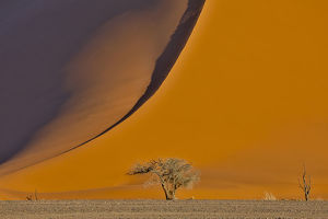 Lone tree and tall sand dune, Sossusvlei, Namibia