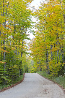 Michigan, Pictured Rocks National Lakeshore, road to Miners Falls with trees in fall