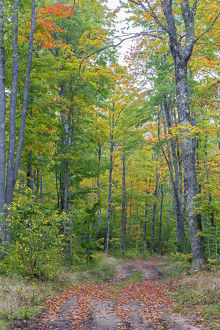 Michigan, Pictured Rocks National Lakeshore, road through forest