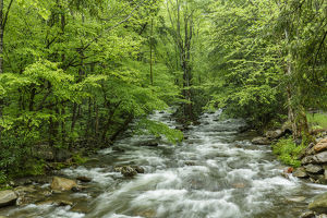 Middle Prong in spring, Great Smoky Mountains National Park, Tennessee