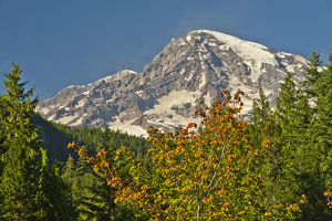 Mount Rainier from Longmire, Mount Rainier National Park, Washington, USA