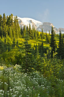 Mount Rainier, from Paradise, Mount Rainier National Park, Washington, USA