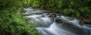 Mountain river. Forest interior. Bwindi Impenetrable Forest. Uganda