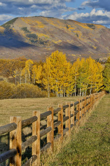 Mountains around Township of Aspen fall along Owl Creek Road with wooden fence autumn
