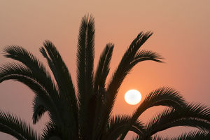 Namibia. Setting sun and a silhouetted palm tree, Swakopmund