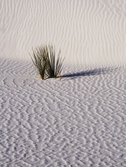 North America;USA;New Mexico, White Sands National Monument;Sand Dune Patterns