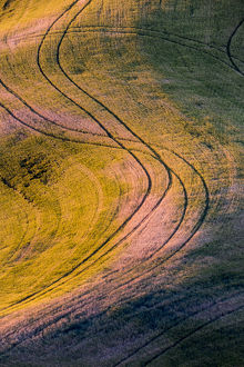 North America;USA;Washington State;Palouse Region;'S' curve in Wheat Field