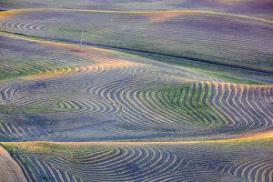 North America;USA;Washington State;Palouse Region;First light on freshly swathed