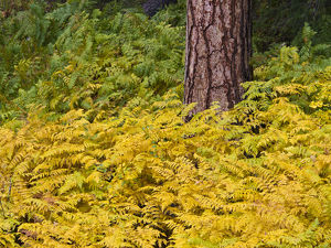 North America;USA;Washington;North Cascades National Park
