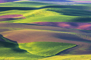 North America;USA;Washington;Palouse Country;Spring Rolling Hills of Wheat and Fallow