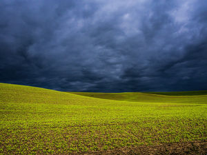 North America;USA;Washington;Palouse Country;Spring Field of Peas With Storm Coming