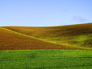 North America;USA;Washington;Palouse Country;Spring Wheat Field