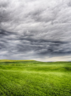 North America;USA;Washington;Palouse Country;Spring Wheat Field With Storm Coming