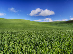 North America;USA;Washington;Palouse Country;Spring Wheat Field and Clouds