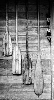 Oars are hung on wooden shed in Big Cypress, Florida, USA
