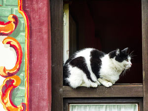 Oberammagau, Germany. Black and White Tuxedo Cat sits on a window ledge of a painted