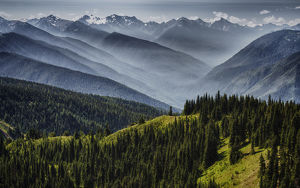 Olympic National Park, USA - Hurricane Ridge - Fog layers melt revealing the depth