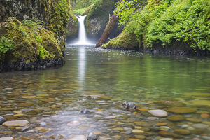 OR, Columbia River Gorge National Scenic Area, Punch Bowl Falls