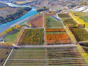 Orchards, poplar trees, and Lake Dunstan, Bannockburn, near Cromwell, Central Otago