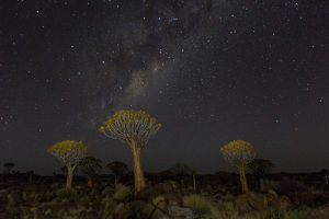 Quiver trees landscape at night with Milky Way, Namibia