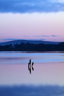 Reflections in New River Estuary at dusk, Invercargill, Southland, South Island