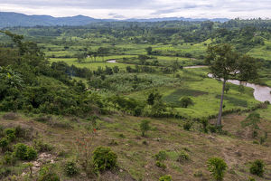 Rural scene near Bwindi Impenetrable Forest. Uganda