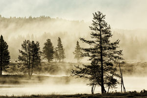 Silhouetted trees along Yellowstone River, Hayden Valley, Yellowstone National Park