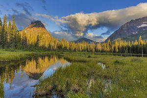 Sinopah Mountain reflects in beaver pond in Two Medicine Valley in Glacier National Park