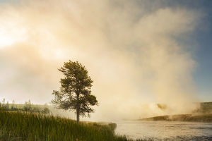 Steaming mist at sunrise along Firehole River, Yellowstone National Park, Wyoming/Montana