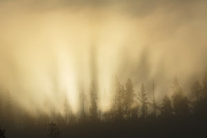 Sunbeams over trees, Midway Geyser Basin, Yellowstone National Park, Wyoming/Montana