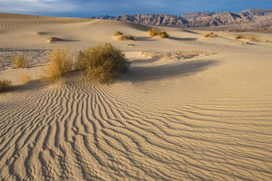 Sweeping vista of dunes, Death Valley National Park, California