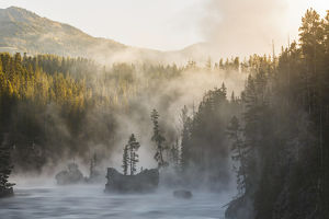 Tees and boulders in Yellowstone River at sunrise, Yellowstone National Park