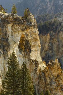 Trees and canyon walls, Grand Canyon of Yellowstone, Yellowstone National Park