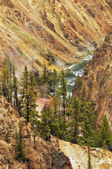 Trees and colorful patterns on canyon walls, Grand Canyon of Yellowstone, Yellowstone