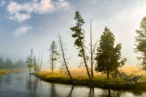 Trees and mist at sunrise along Firehole River,, Upper Geyser Basin, Yellowstone