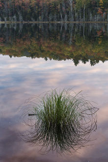 Tuft of grass and morning sky reflection, Irwin Lake, Hiawatha National Forest, Upper