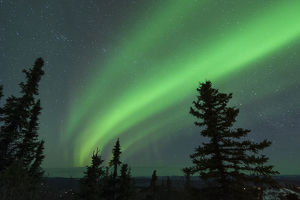 US, AK, Fairbanks. Dramatic curtain display of Aurora Borealis see from Ester Dome